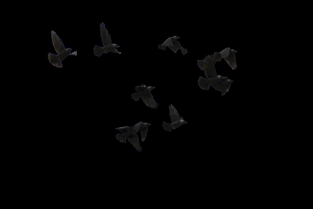 Adm Corujita: Materiais da Capa Dark