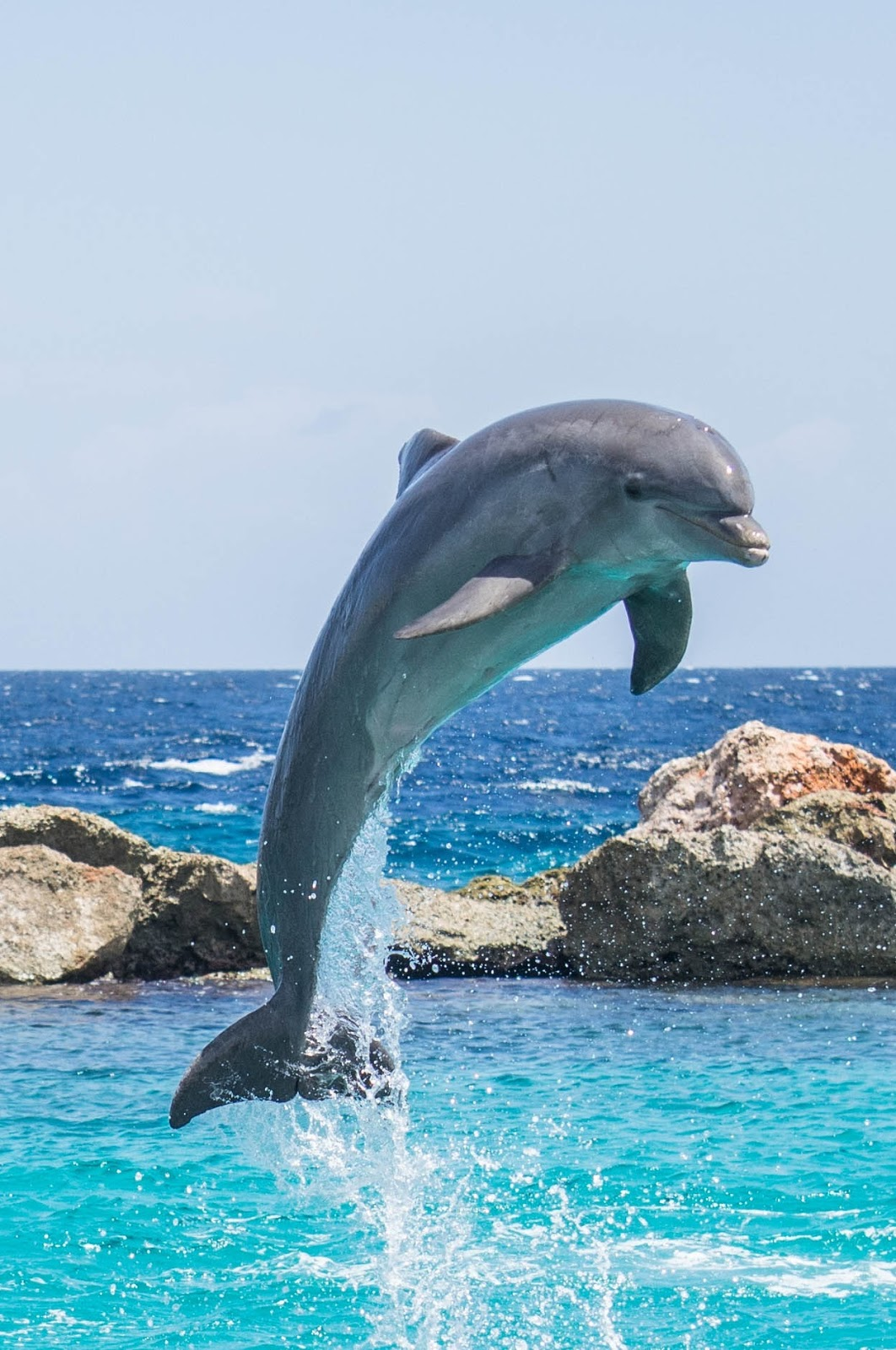 A dolphin jumping from the water.