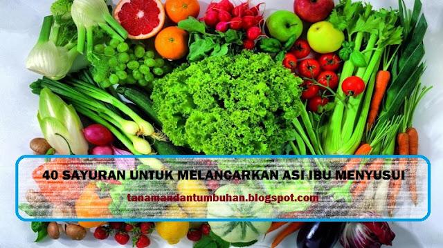 sayuran untuk memperlancar ASI