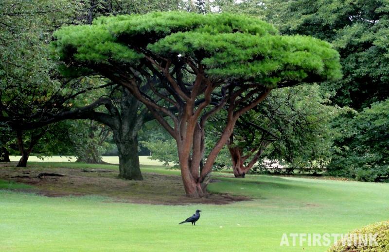 Shinjuku Gyoen 新宿御苑 tree