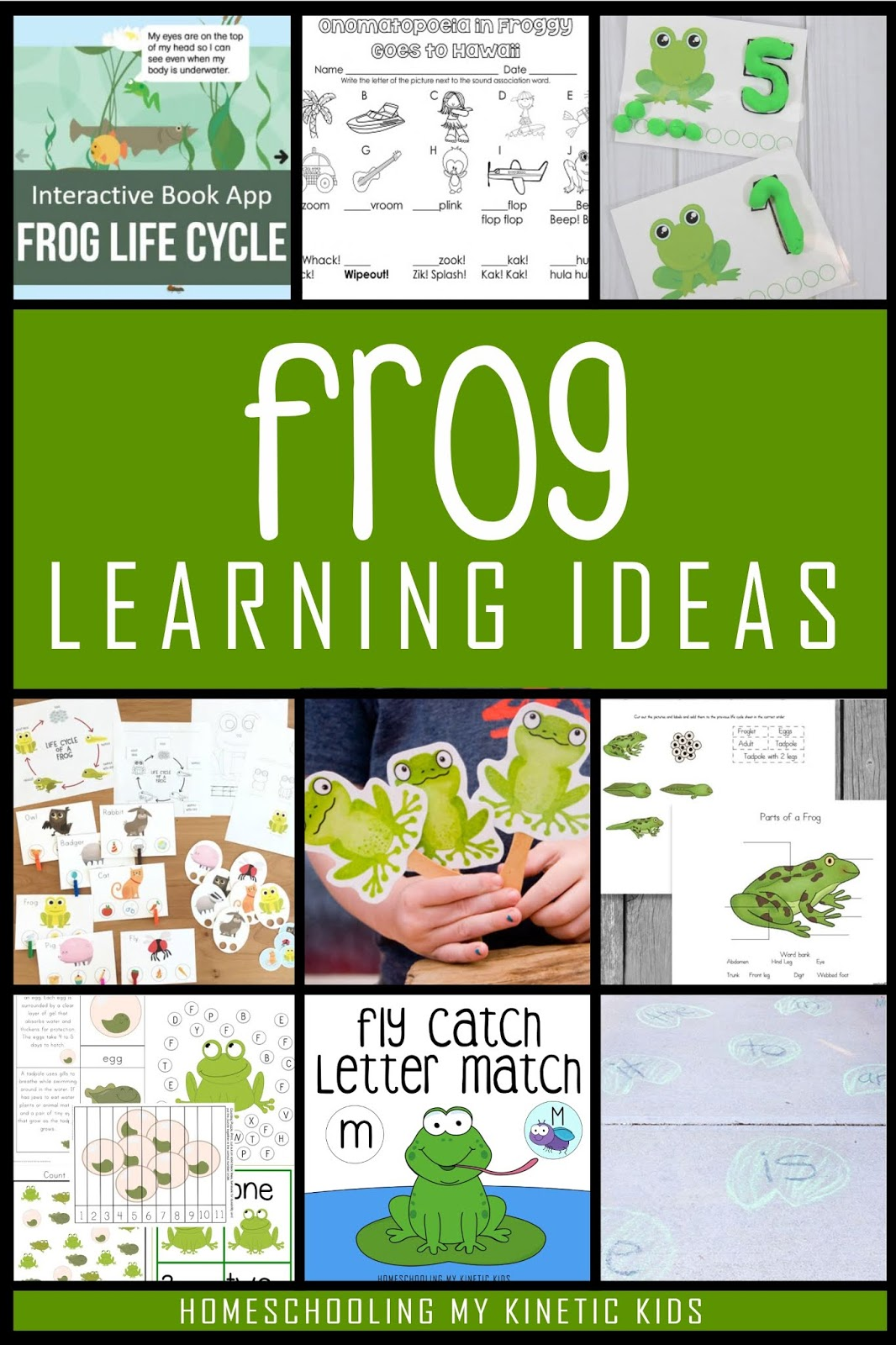 The Ultimate Guide For Learning About Frogs