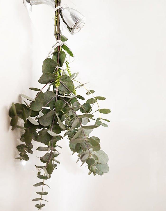 Tendencia wellness ducha de eucalipto