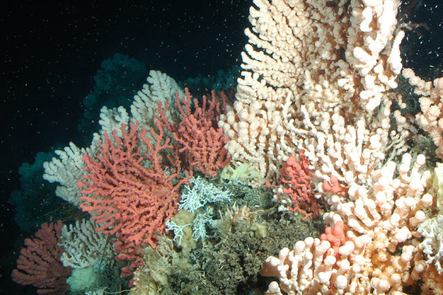 Ocean acidification research makes a strong case for limiting climate change
