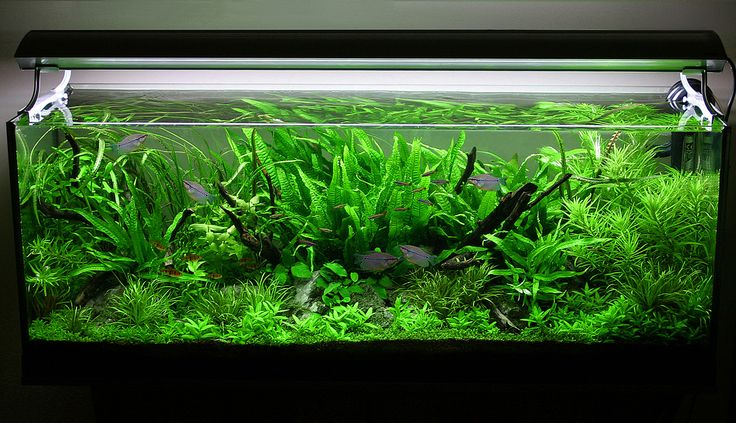 hồ thủy sinh trồng dương xỉ