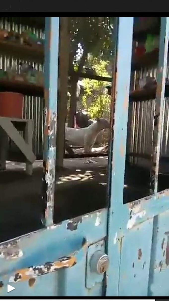 Muere bebe de 2 años por ataque de un pitbull