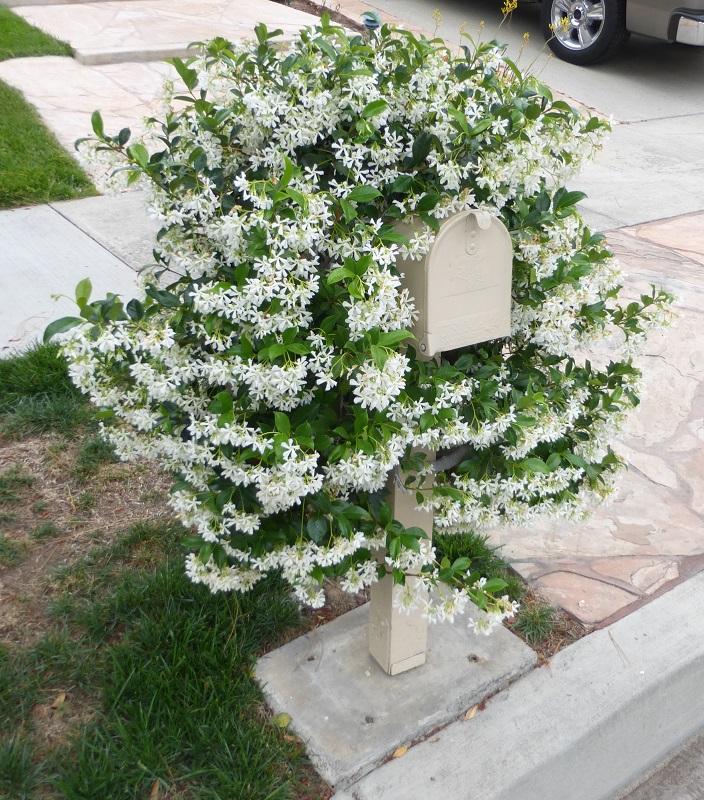 jasmine mailbox