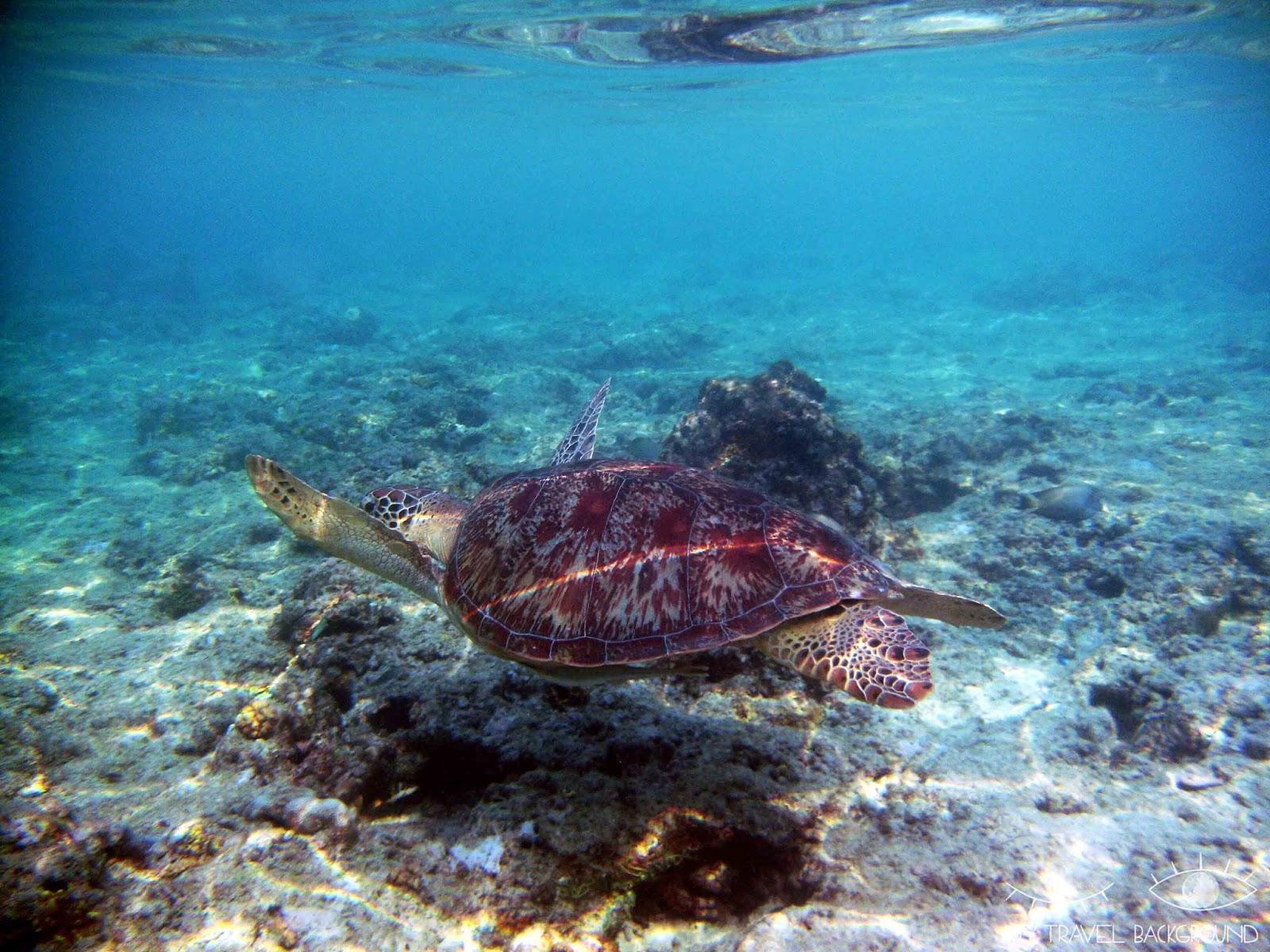 My Travel Background : 2 jours sur l'île de Gili Trawangan - Plongée avec les tortues