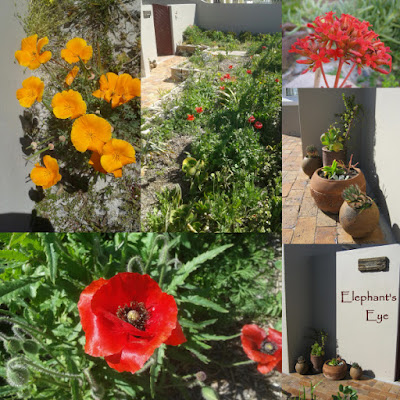 Californian poppy, Kalanchoe Flanders poppy