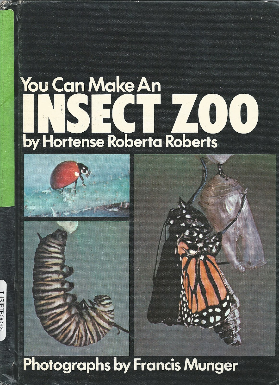 How to Make an Insect Zoo