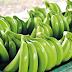 Competitividad del banano está siendo afectada por Electricaribe en la Zona Bananera