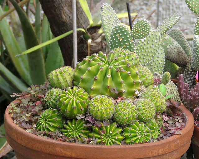 Cactus, via Anzillotti, Livorno