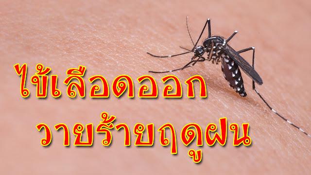 ไข้เลือดออก วายร้ายฤดูฝน อาการไข้เลือดออกจากยุงลาย First Aid for Dengue