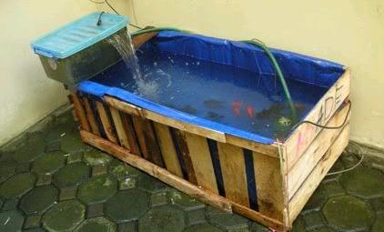 Budidaya ikan lele di lahan sempit | Budidaya Ikan Lele