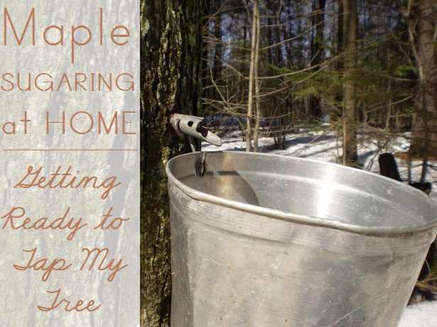 Maple Sugaring at Home: Getting Ready to Tap My Tree
