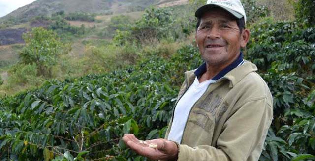 Petani Kopi di Pegunungan Peru