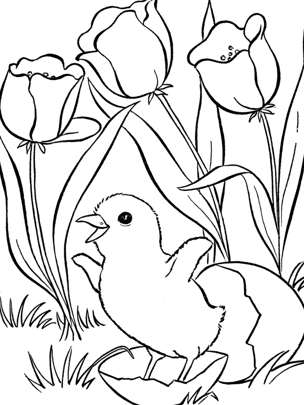 coloring spring pages - photo #11