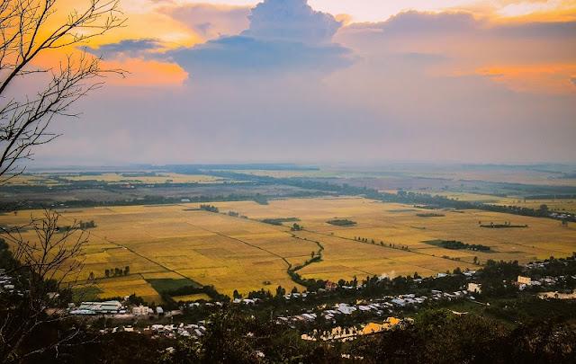 Vietnam is wonderful in ripen rice season 10