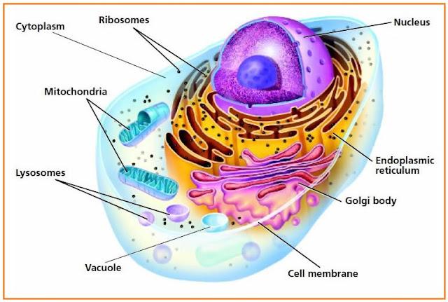 Soal essay biologi tentang sel