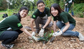 Asian TD personnel planting trees