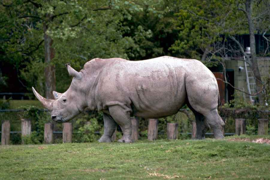 Skyrim Animated Wallpaper White Rhinoceros Pictures