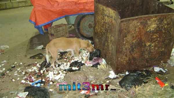 كلب ضال يعقر 8 أطفال فى اتميدة بالدقهلية