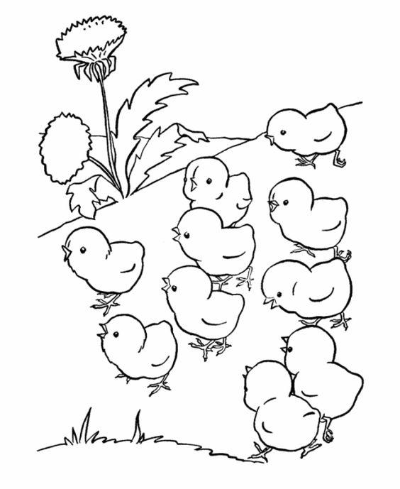 Tranh tô màu những chú gà con