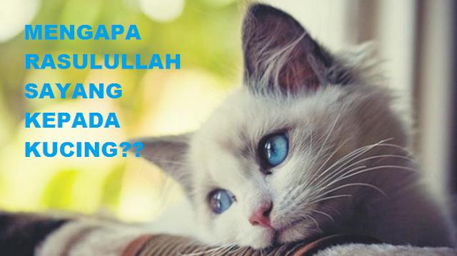 Mengapa Rasulullah Sangat Sayang Kepada Kucing?