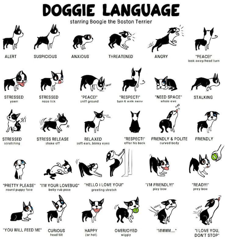 My Favorite Pup Jasmine: Doggy Body Language