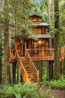 แบบบ้านต้นไม้