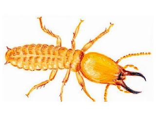 perbedaan-rayap-dan-semut.jpg