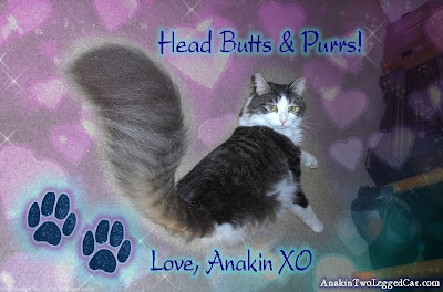 Anakin Two Legged Cat Feather Duster Giant Tail