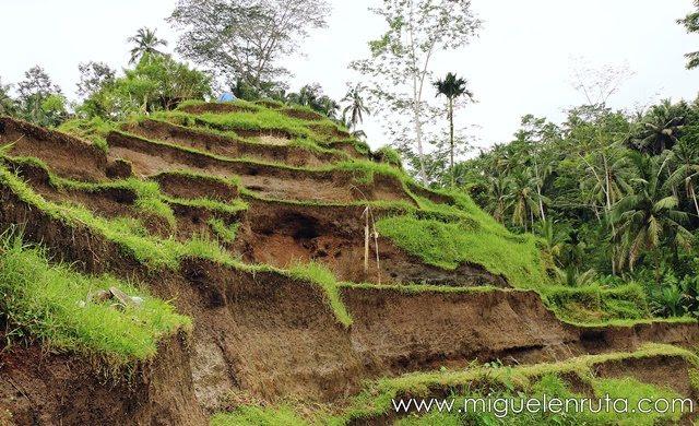 Caminando-terrazas-Tegalalang