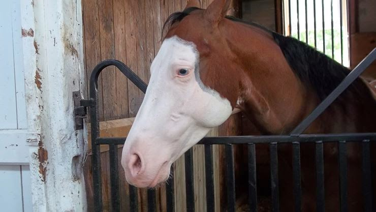 Beautiful Horse in Stall Image Picture Photo for Free.