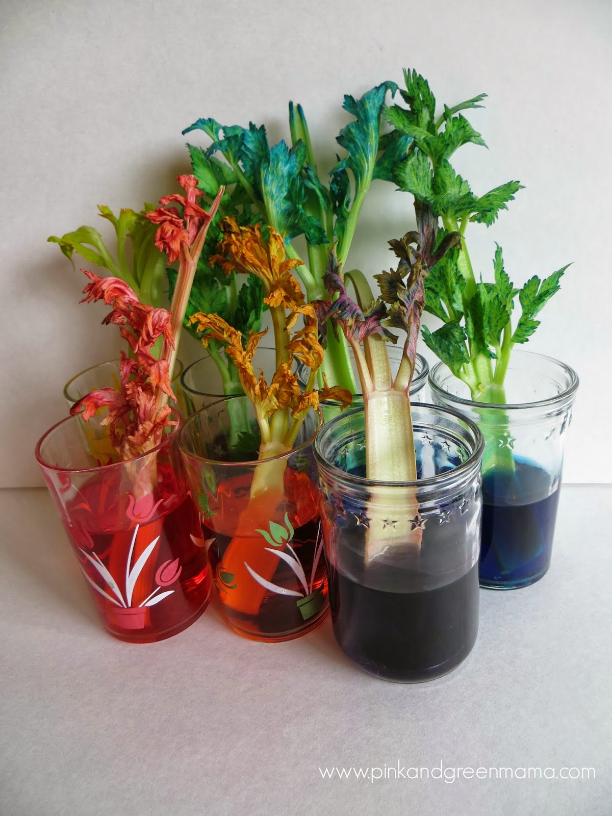 Rainbow Celery Stalks In Vintage Glassware Kid Kitchen Science on free easter preschool worksheets