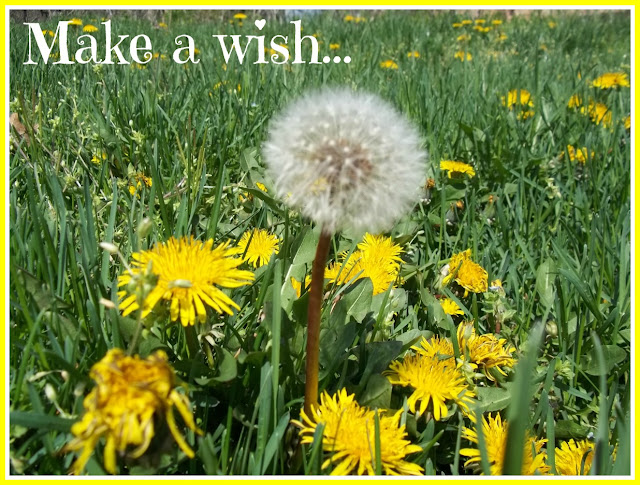 Make a wish on a dandelion seed poster picture photo