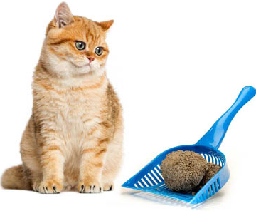 9 Tips For Choosing The Best Cat Urine Cleaner