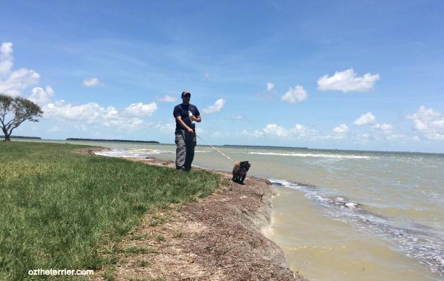 Oz walking on beach for walk your dog week
