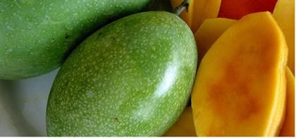 tips memilih buah mangga segar