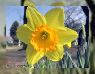 linda flor Narciso