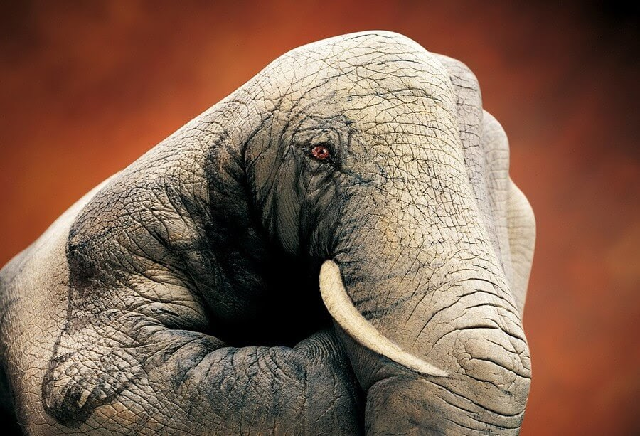 02-Elephant-Guido-Daniele-Body-Painting-www-designstack-co