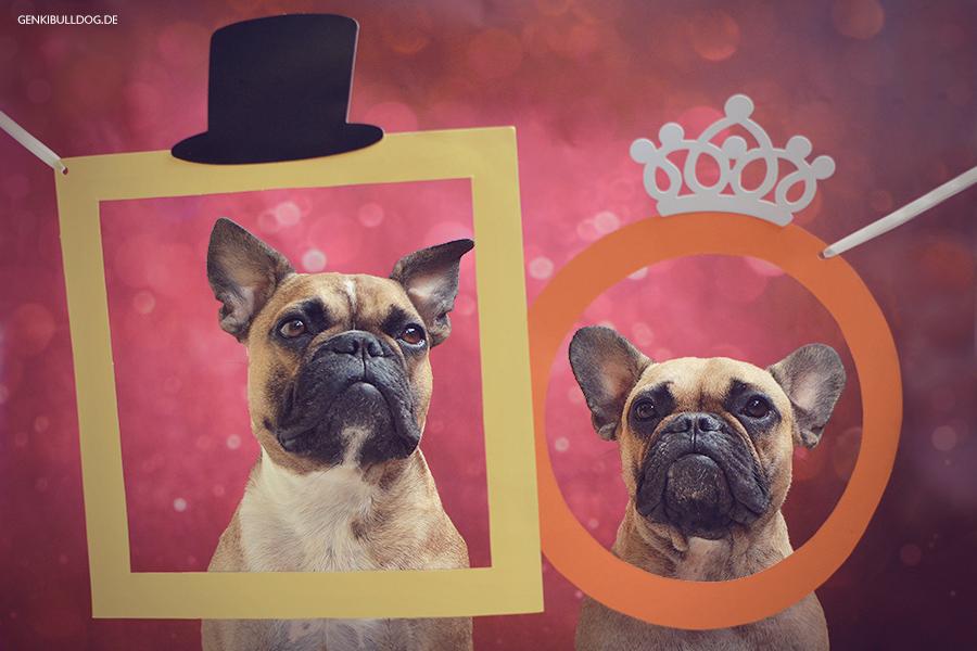 Hundeblog GenkiBulldog Monatspfoto Juni: Das Runde und das Eckige