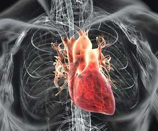 Tentang jantung dan cara kerjanya