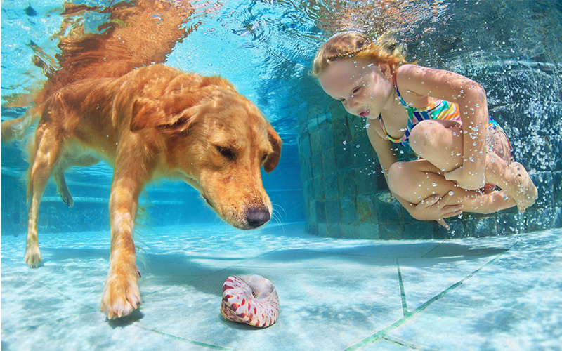 Dog and a young girl underwater look at seashell at the bottom of a swimming pool