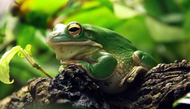 katak di hutan