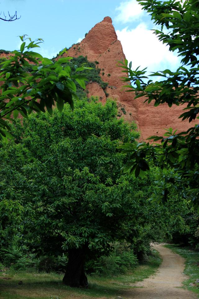 Los castaños caracterizan el paisaje de Las Médulas