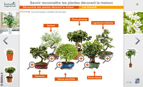 Le blog de millilitre mai 2016 for Conseil sur les plantes