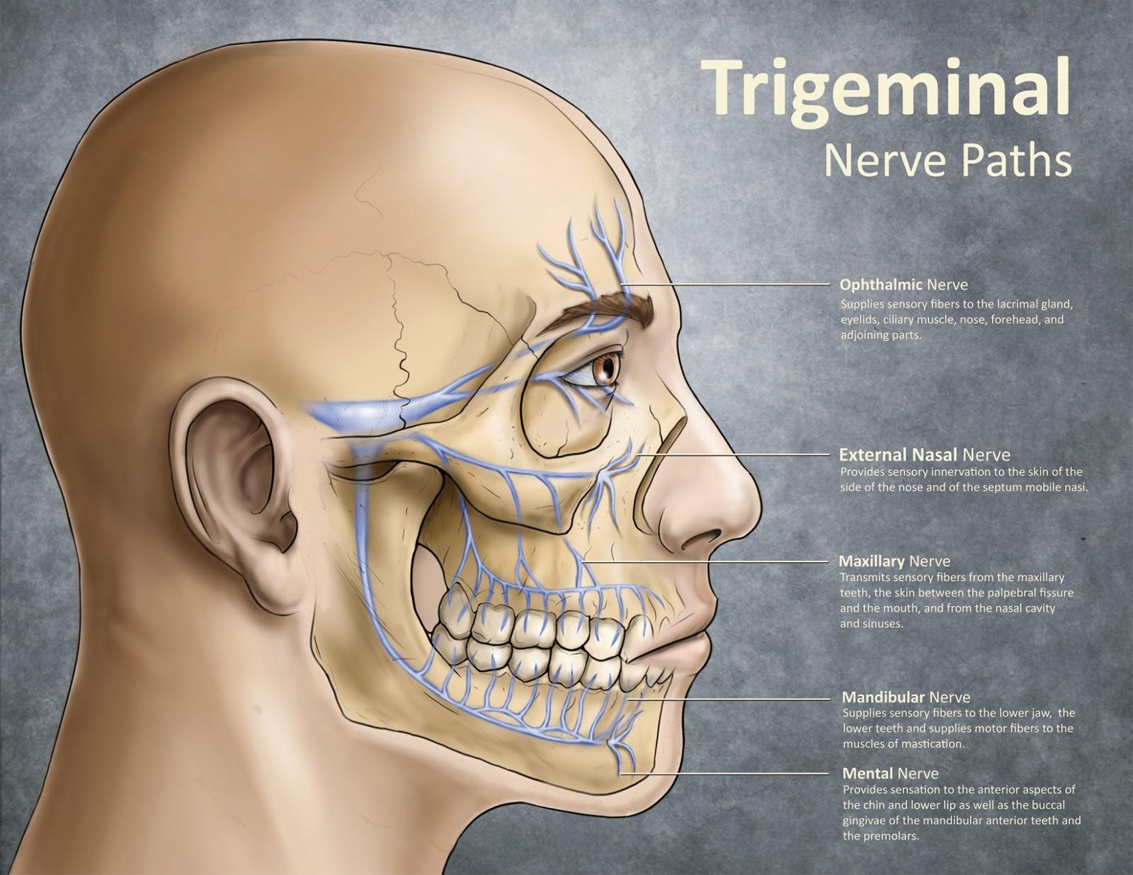 teeth and facial pain jpg 853x1280