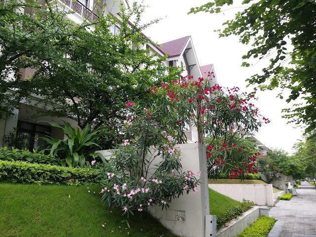 Bán biệt thự khu Q Central Park - KĐT Ciputra Nam Thăng Long