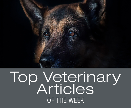 Top Veterinary Articles of the Week: Bladder Stones and Infections, Motion Sickness, and more ...