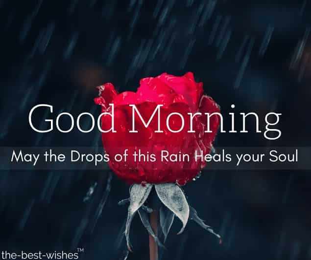 rainy morning image with red rose
